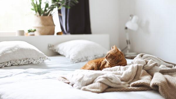 Quer ter pets em apartamento? Confira aqui 4 dicas!